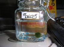 Marimo_in_the_bottle
